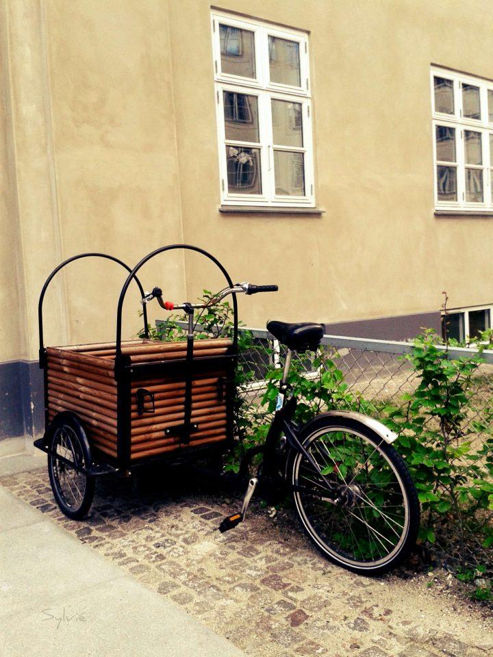 Bicicletta in Danimarca cesto