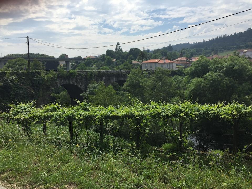 Vista delle vigne dell'hotel- azienda vinicola della zona alta del Rias Baixas