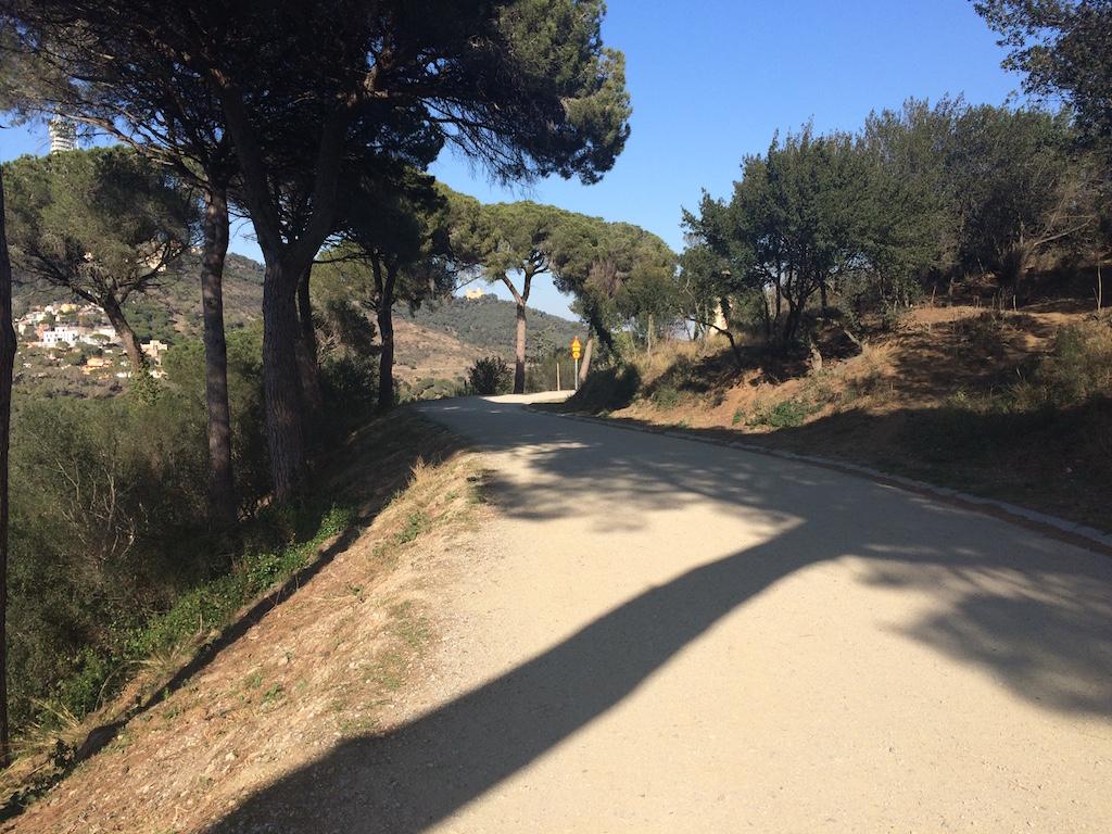 Il parco di Collserola, un vero bosco nella zona alta della città.