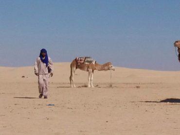 Viaggio al sud della Tunisia tra deserto, oasi, palmeti e laghi salati