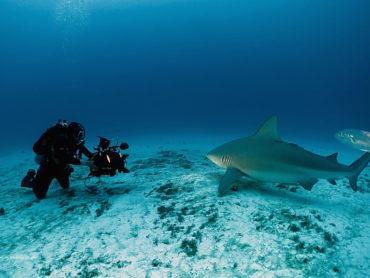 Cristina Limonta, da contabile a professionista delle riprese subacquee in Messico