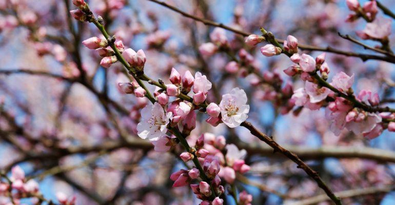 Otto festival di primavera nel mondo. Tradizioni da scoprire